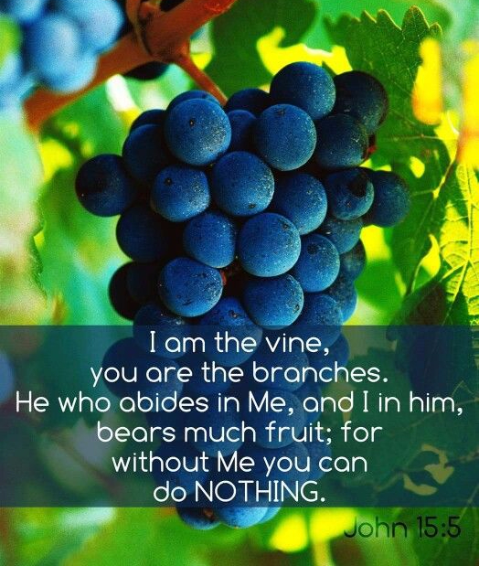 john-15-5-i-am-the-vine-with-grape-background