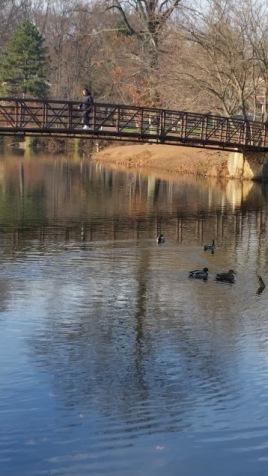 Footbridge-Roosevelt-park